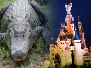 AlligatorAndCastle