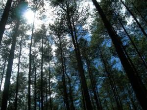 sun-woods